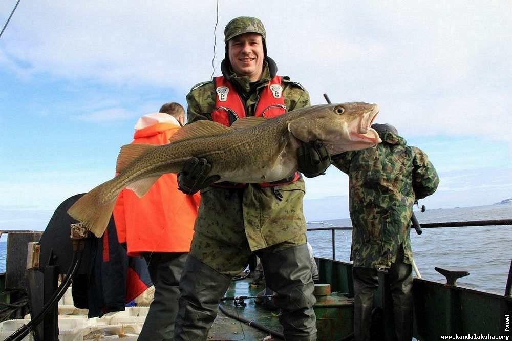 морская рыбалка в териберке форум